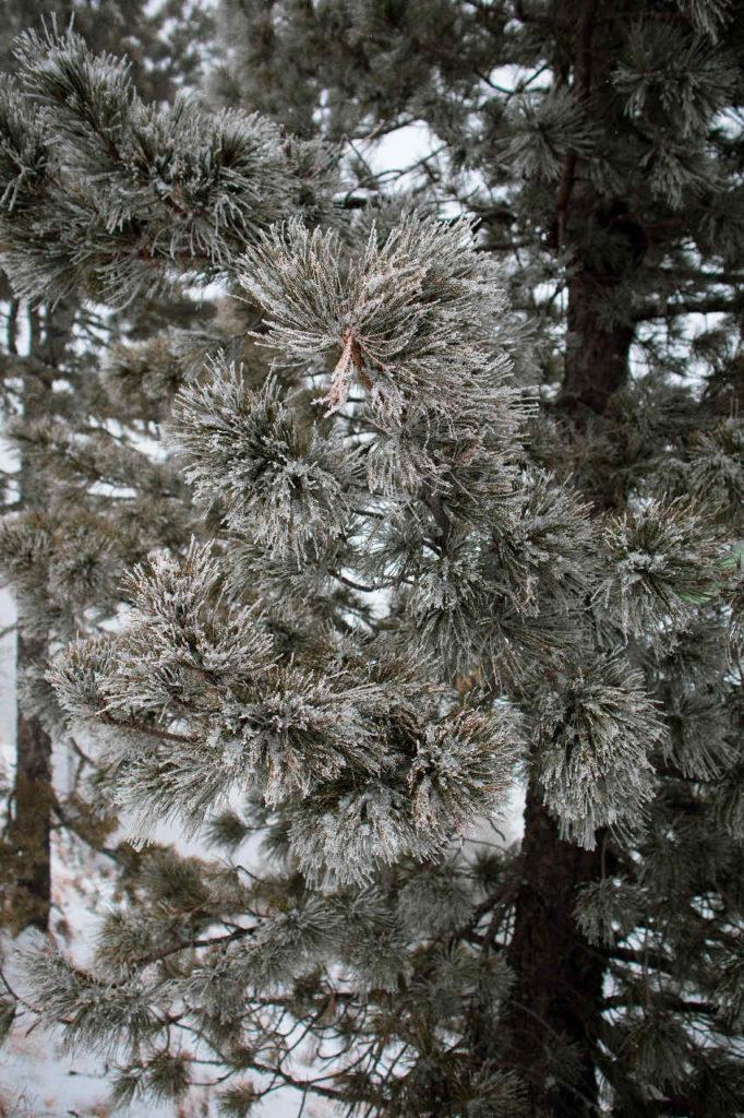 Деревья в снегу на склоне тропы Пиа Любви